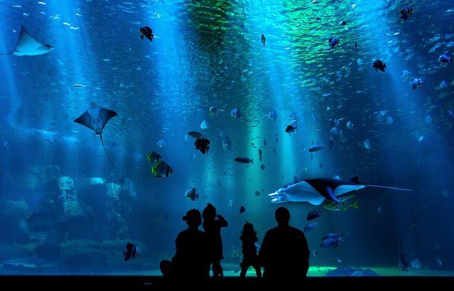 この恋あたためますか水族館ロケ地場所はどこ?鯛パフェはどこで売ってる?